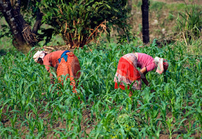 How 'Agriculture Saved Me From Committing Suicide'