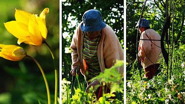 Tirups Herb Garden