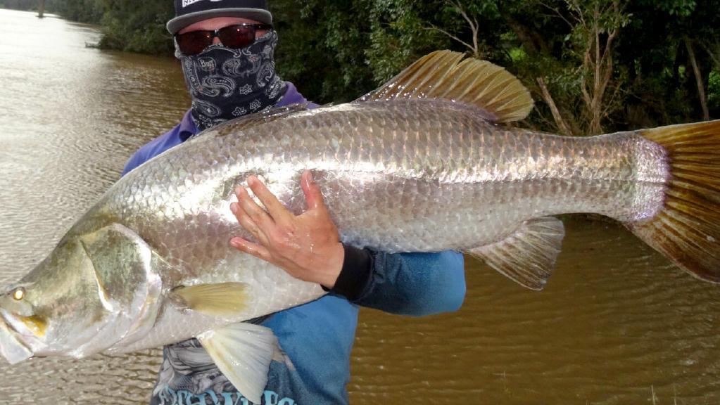 Download 65 Koleksi Gambar Ikan Baramundi HD Terbaru