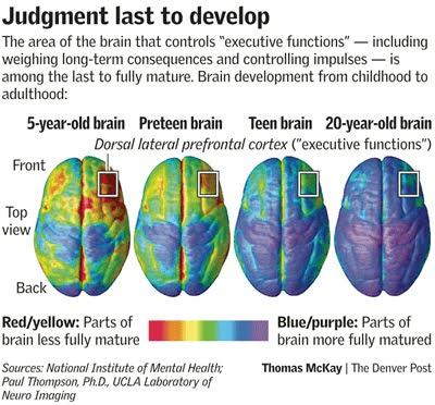 Teen Brain Development 74