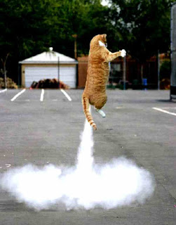 Cat lifts off
