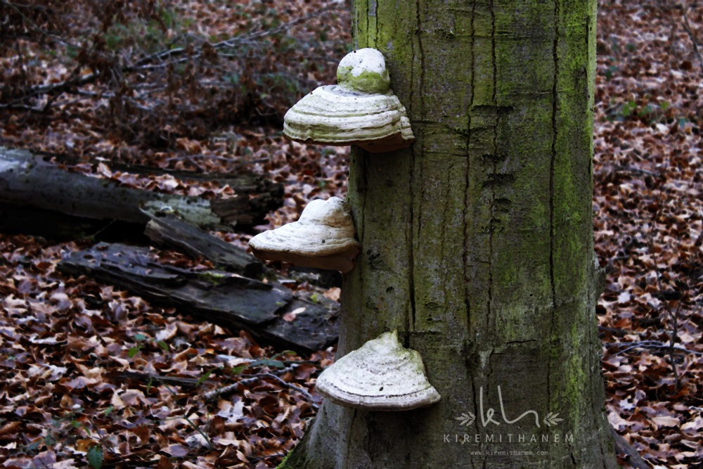 Ağaç,bakteri,ağaç gövdesi,çürük ağaç