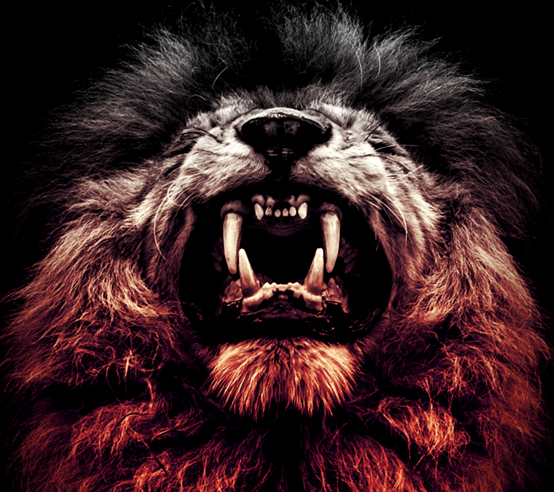 fond d'écran stylé angry lion