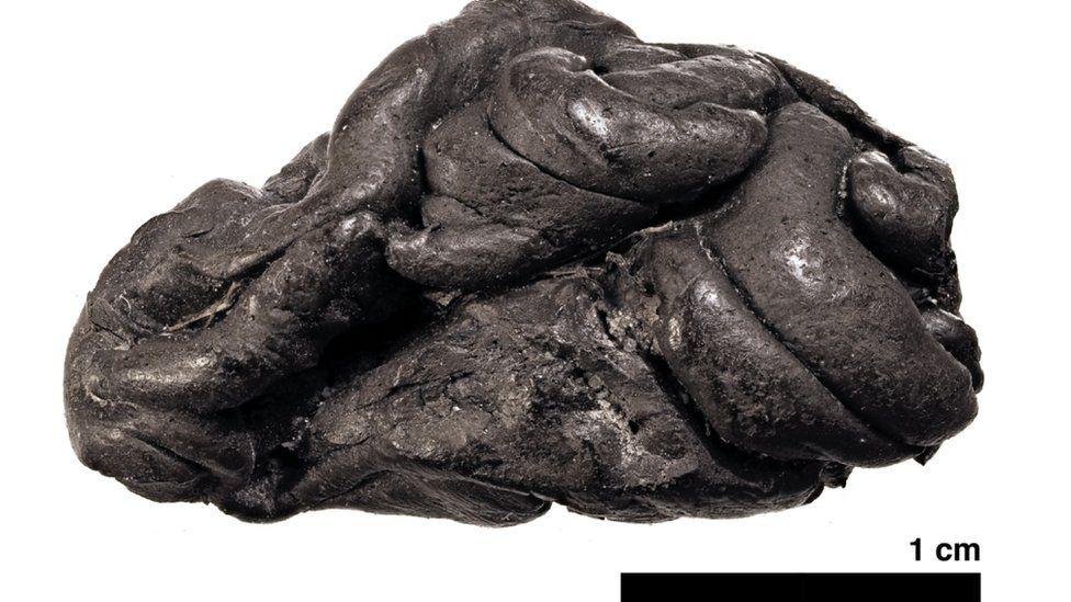 Chicle de corteza de abedul neolítico recuperado en Dinamarca. Foto: THEIS JENSEN