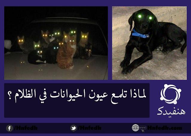 لماذا تضئ عيون الحيوانات في الظلام