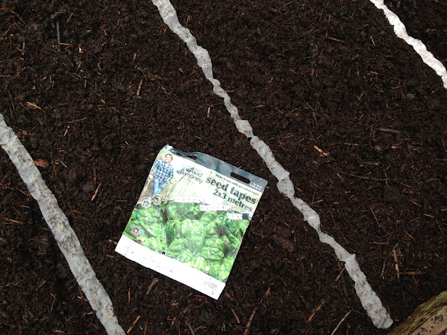 Urban Veg Patch: Sowing seed tapes from Mr Fothergill's range