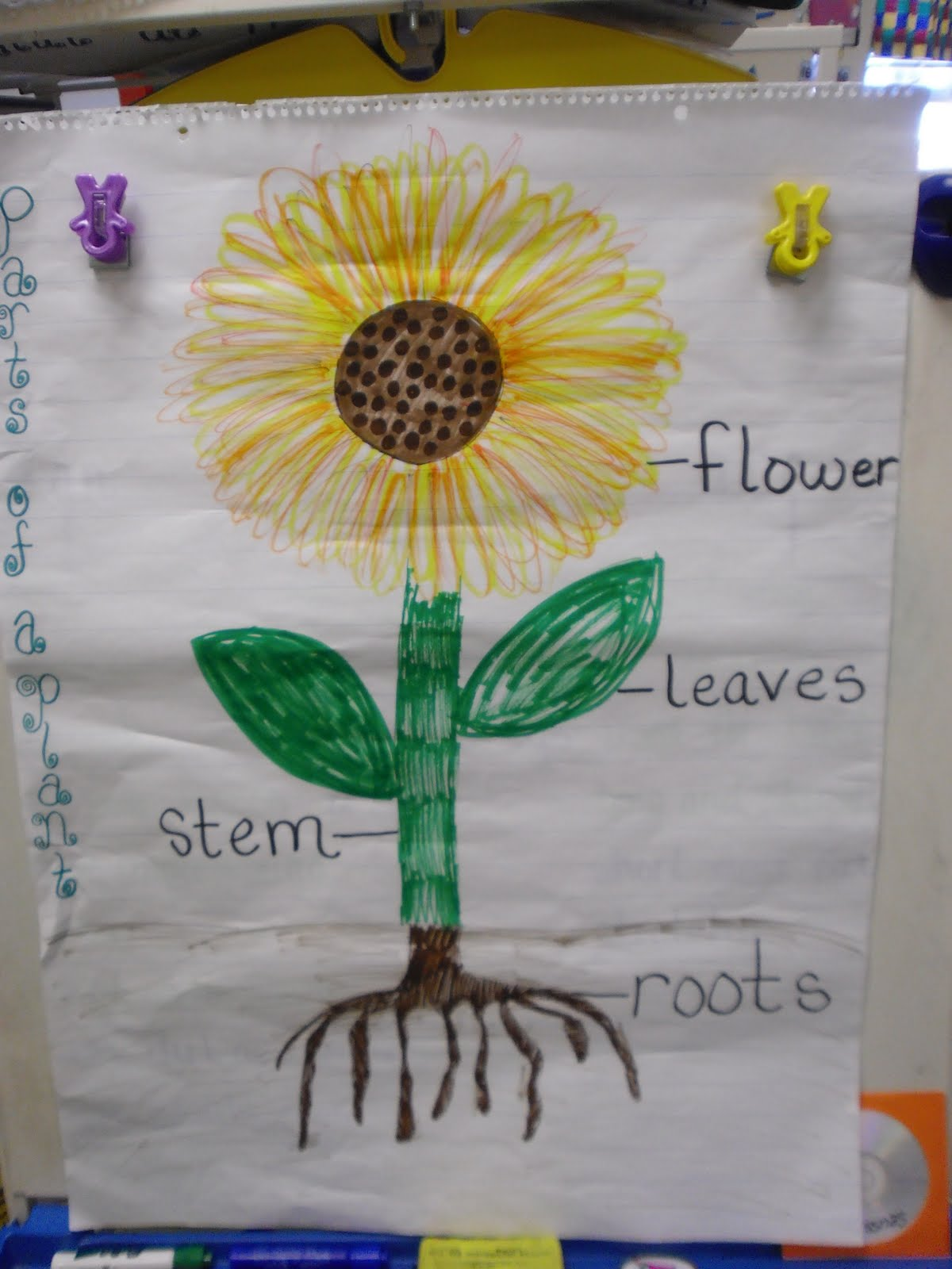 Littlecats Kindergarten Plants Seeds And Wiggly Worms