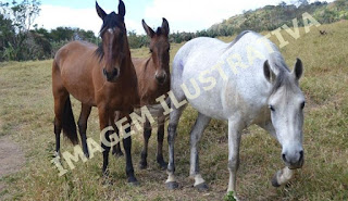 Polícia investiga furto de cavalos em propriedade rural de Roncador