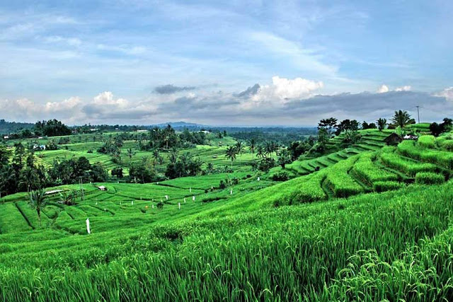 Objek wisata Jatiluwih di Bali 4
