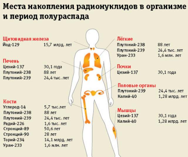 Места накопления радионуклидов в организме