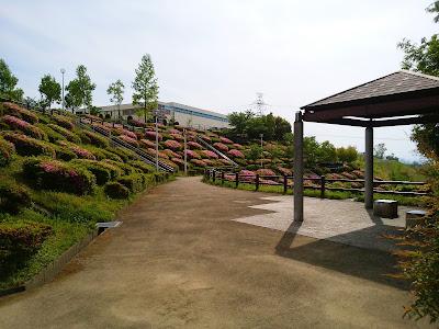 【枚方市・津田サイエンスヒルズ】空見の丘公園のつつじ