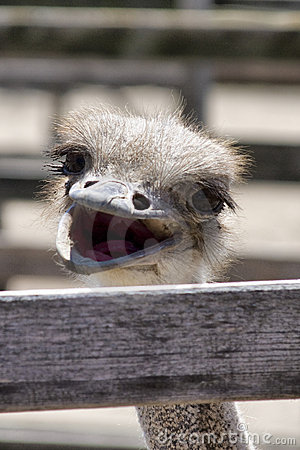 Desktop Wallpaper Of Cute Puppies Funny Ostrich Images Funny Animal