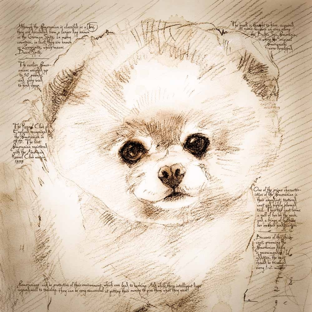 02-Pomeranian-Face-Leonardo-s-Dogs-Cats-and-Dogs-Drawn-in-the-style-of-Leonardo-da-Vinci