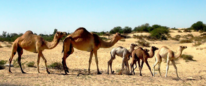 The Camel Family by Reena Prasad