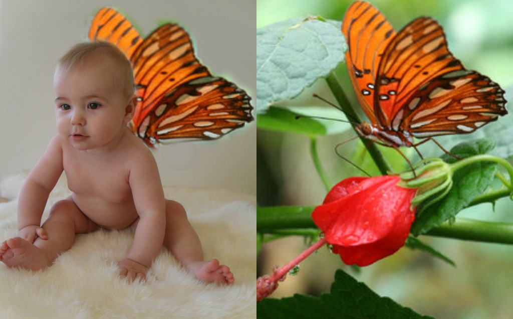 Cute Baby Fairies: Cute Baby Photos: How To Make A Cute Baby Fairy Photo