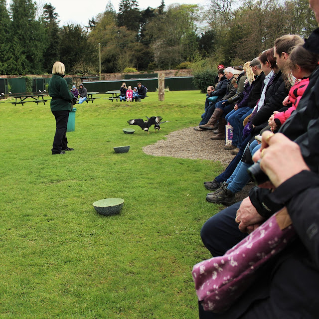 Bird of prey display crowd