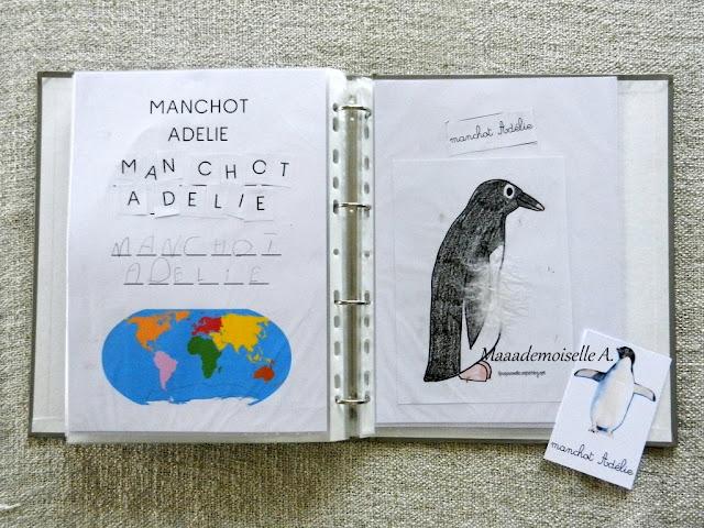|| Activité autour des cartes de nomenclature : Représenter et comparer des animaux (manchot Adélie)