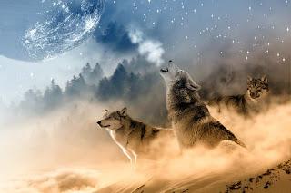 Perbedaan antara  Anjing dengan Serigala