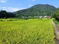 山北の田園風景