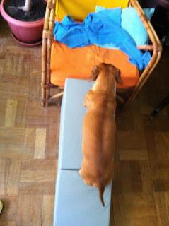 rampas de acesso a cães