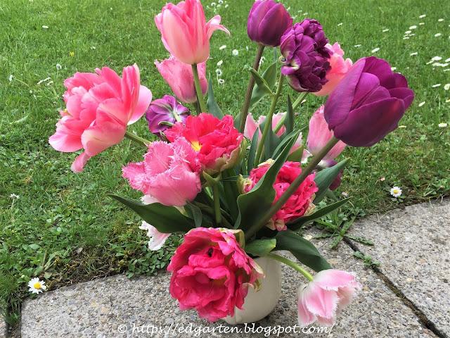 Tulpenbouquet in den Farben pink, rosa und violett