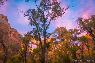 Cramer Imaging's fine art landscape photograph of fall or autumn leaves on trees with a colorful sky at Zion's National Park, Utah