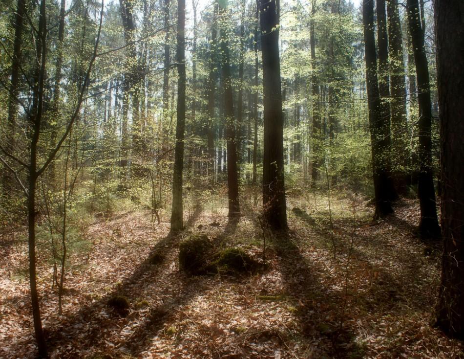 The Forest Deutsch