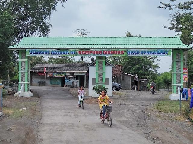 Nikmatnya Wisata Buah Mangga di Kampung Mangga Penggarit Pemalang
