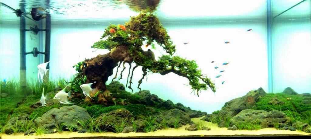 Hồ thủy sinh bon sai - Đơn Độc