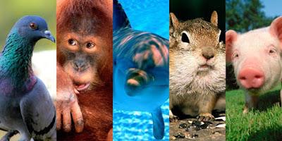 Lista de los 10 animales más inteligentes del mundo-puroingenio