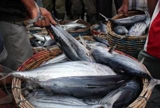 cara mengolah ikan tongkol yang enak,resep masakan dari ikan tongkol segar,olahan ikan tongkol praktis,masakan ikan tongkol yang enak,resep masakan bahan dasar ikan tongkol,