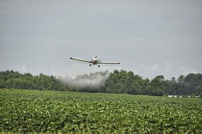 langkah sederhana untuk menghilangkan pestisida