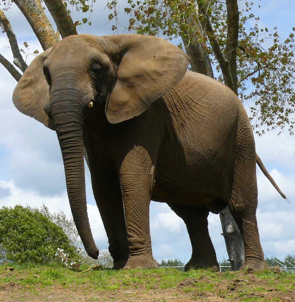 How Rich Is Elefante Net Worth How Rich Is Elefante