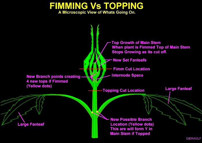 FIMMing_Vs_Topping_comparison.jpg