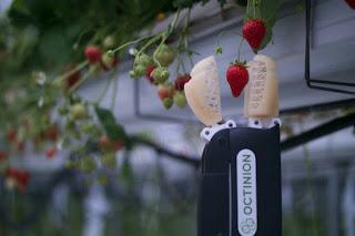 Octinion's strawberry-picking bot