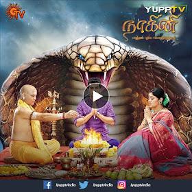 Tamil TV Shows: Watch Nagini TV Show Online - HD