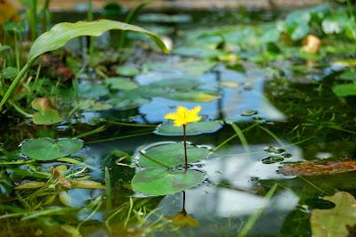 jardin botanique de l'université Bäle- le Chameau Bleu