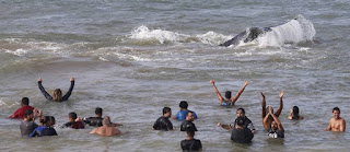 http://vnoticia.com.br/noticia/1895-baleia-jubarte-que-estava-encalhada-em-buzios-e-devolvida-ao-mar