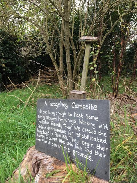Hedgehog campsite