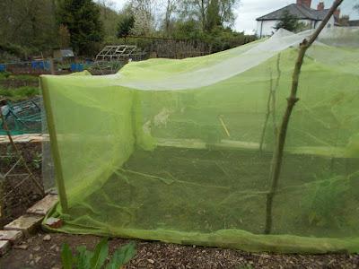 Brassica net 80 Minute Allotment Green Fingered Blog