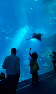 singapore aquarium