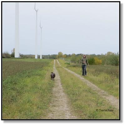 interessante Gassirunden für den Hund