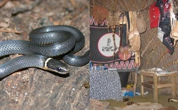 Lady cries for help as snake a native doctor gave her for riches starts having se-x with her