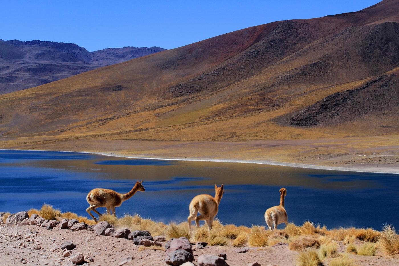 Ciudades De Chile - Buscar Con Google