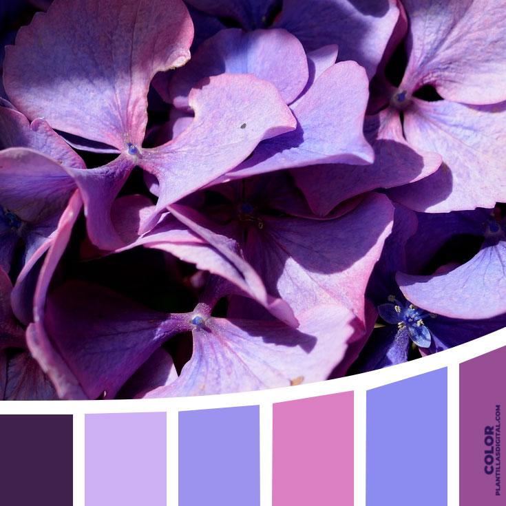 color_502