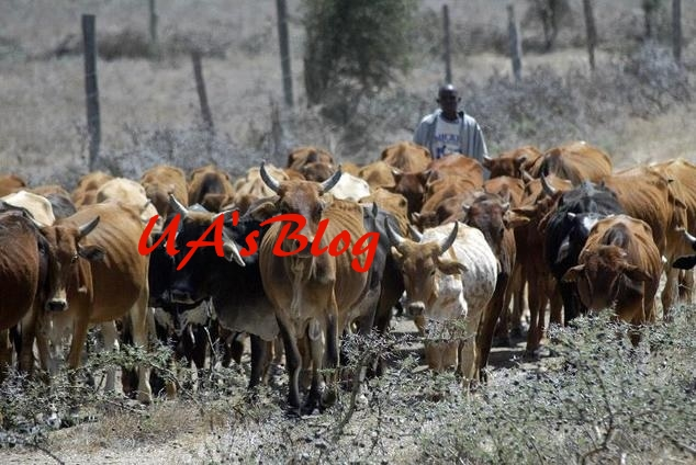 Herdsmen: Grazing, cattle ranching private business – Yoruba elders tell FG