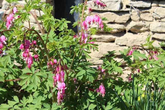 castle in Ohio, bleeding hearts