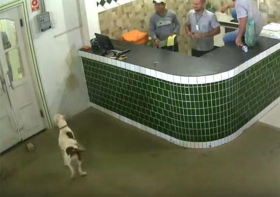 Pitbull invade loja em Rondônia e causa pânico - IMG 1