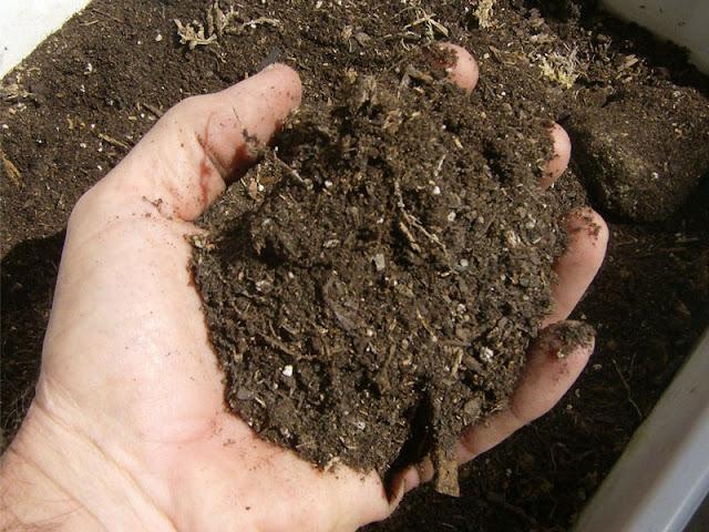 Tips Membuat Pupuk Kompos Alami Tapi Sangat Menyuburkan