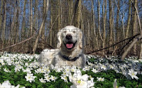 Dogs and spring perfume